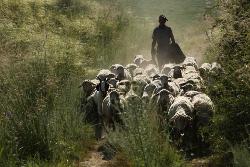 Pastor con sus ovejas en un camino polvoriento