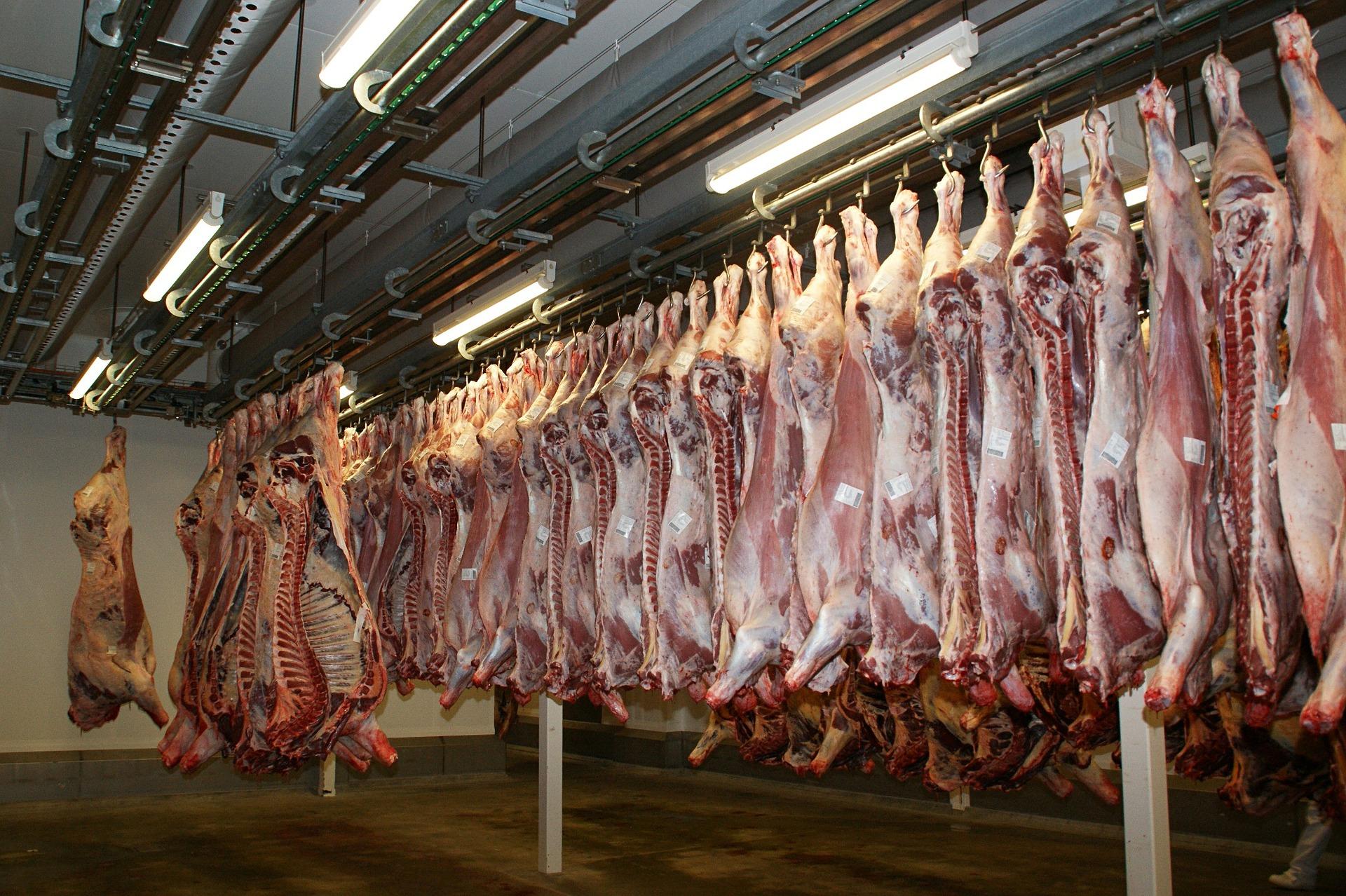 Canales de carne