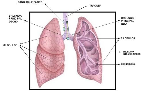 Cáncer de pulmón | Comunidad de Madrid