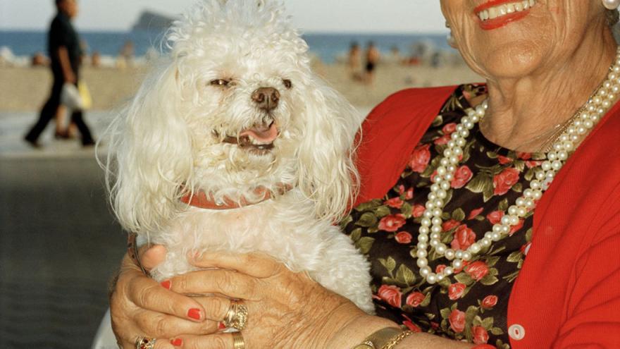 Caniche blanco en brazos de señora
