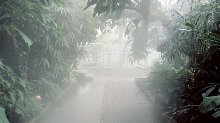 Camino con vegetación a los lados y bruma que cubre el fondo