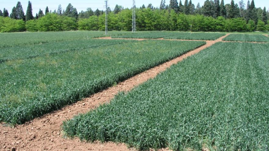 Agricultura de conservación
