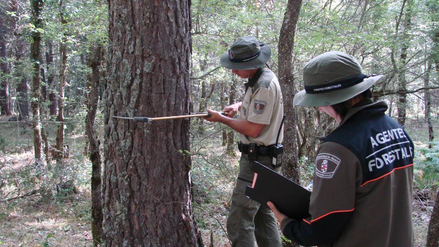 Agentes forestales realizando un inventario para un aprovechamiento de madera