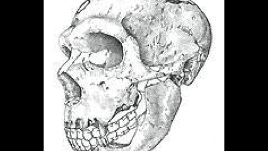 Paleoantropología Pinilla