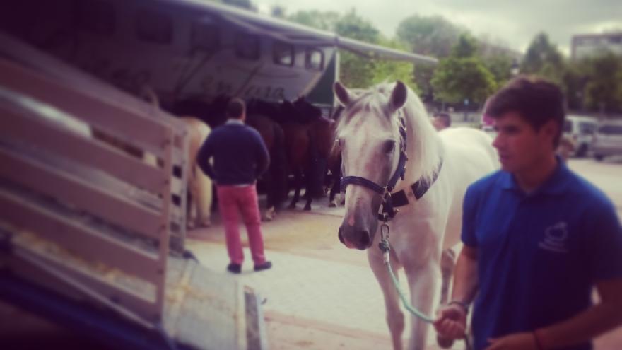 Los días de rejones, los caballos llegan a la plaza desde muy temprano