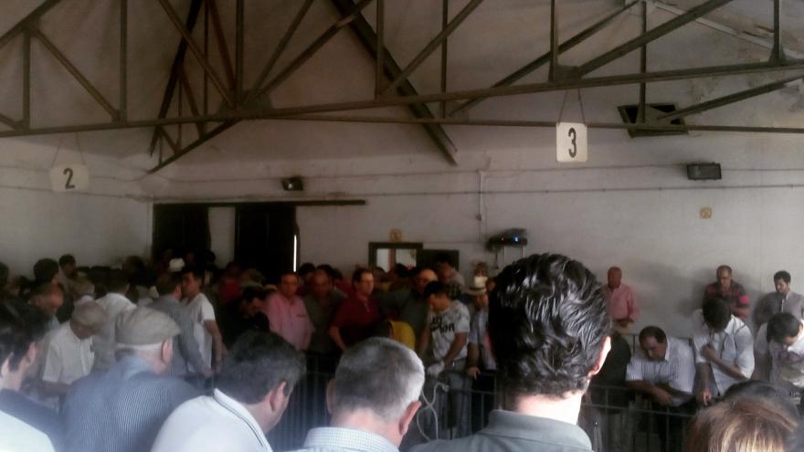 Dentro de los corrales de Las Ventas, para ver a los toros que se lidian por la tarde