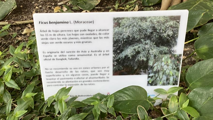 Cartel informativo del ficus benjamina