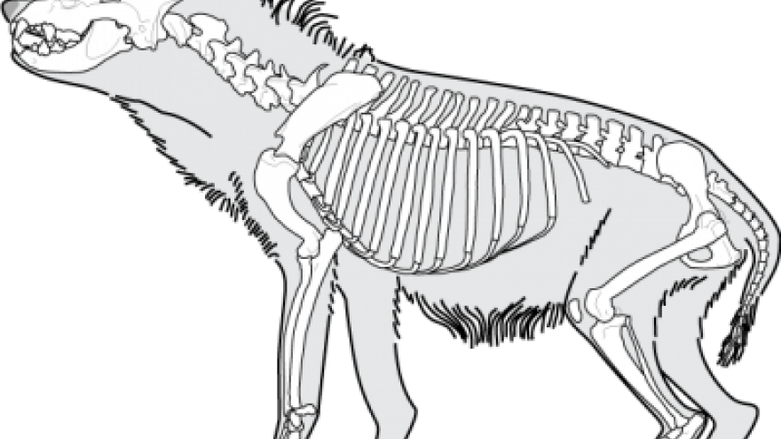 paleontología Pinilla