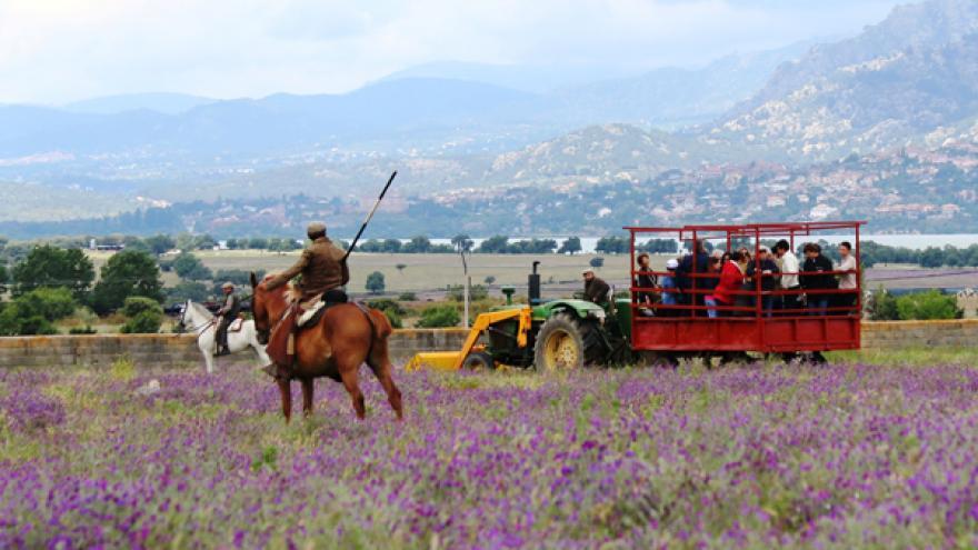 Imagen de Visita Guiada
