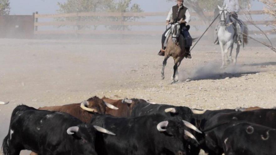 Caballo y toros