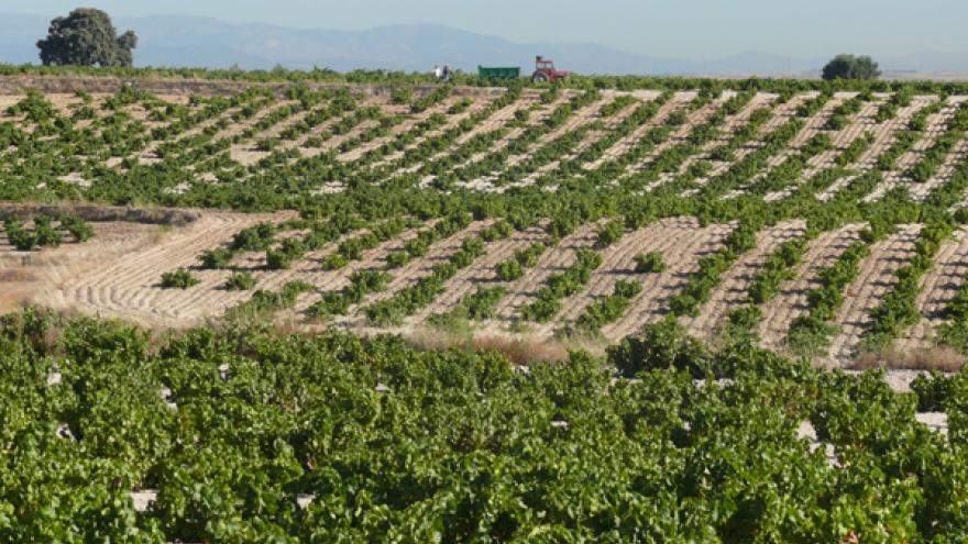 Viñedos DOP Vinos de Madrid