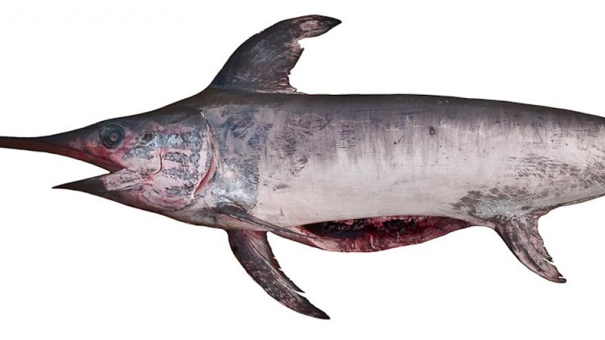 Imagen de pez espada