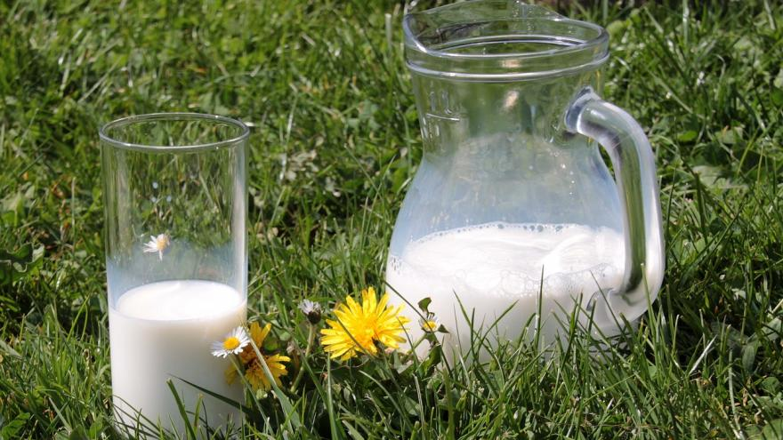 Jarra y vaso de leche sobre la hierba