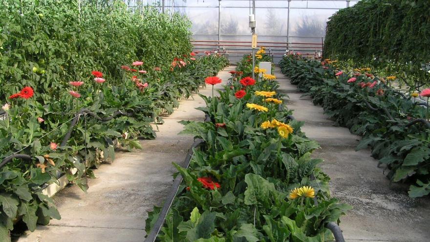 flores en invernadero