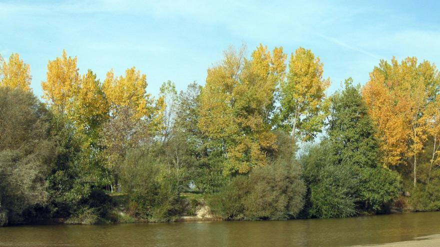 Mural este.Río rodeado de árboles