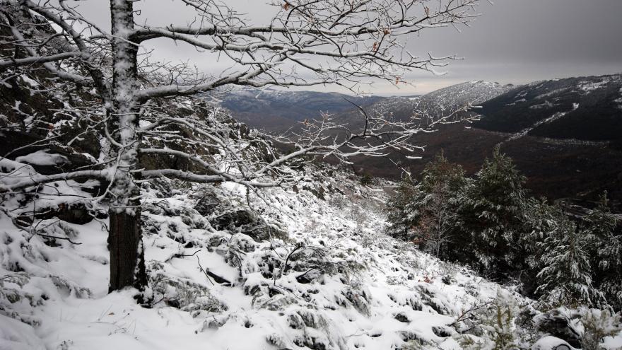 Hayedo de Montejo nevado
