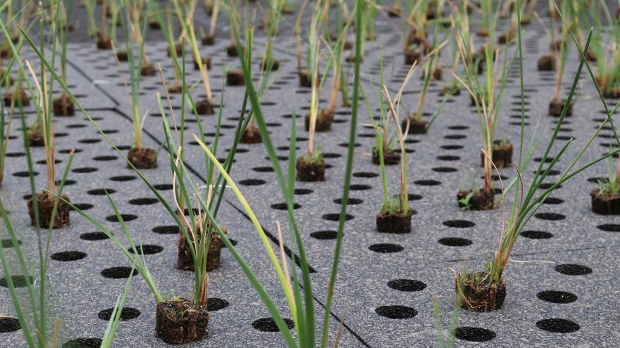 La Comunidad de Madrid impulsa un proyecto piloto para depurar las aguas con plantas