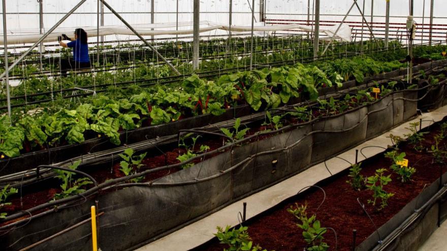 Plantos de IMIDRA