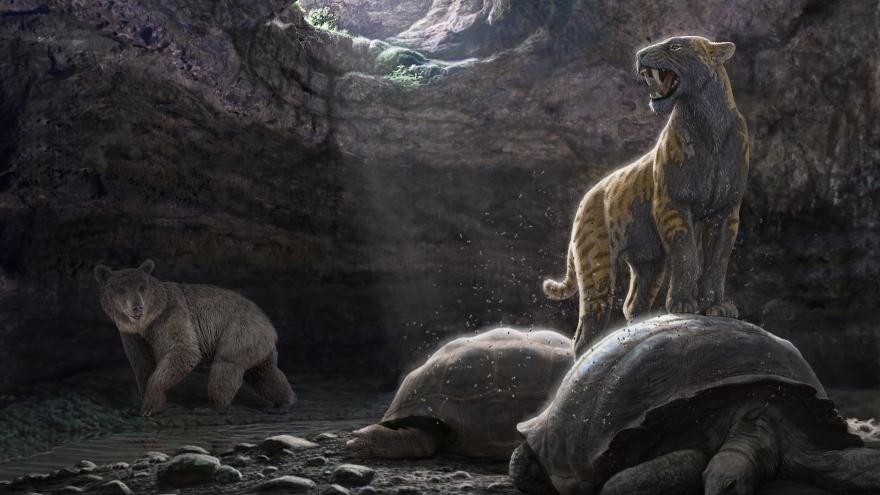 Recreación de una imagen de la época, con un tigre dientes de sable encima de una tortuga y un oso viendo la imagen