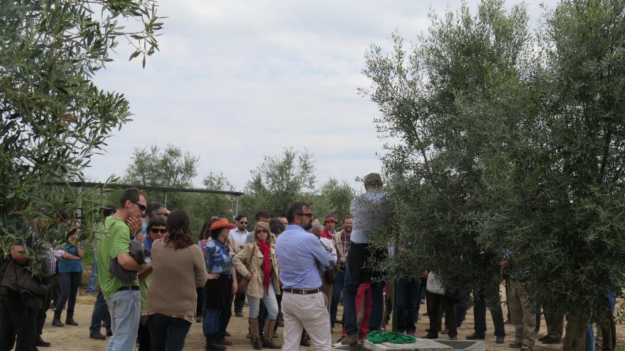desarrollo de la jornada de olivicultura