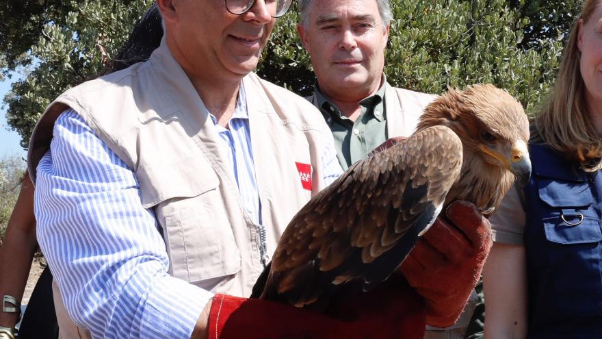 El Parque ha acogido la suelta de dos águilas imperiales ibéricas del Centro de Recuperación de Animales Silvestres