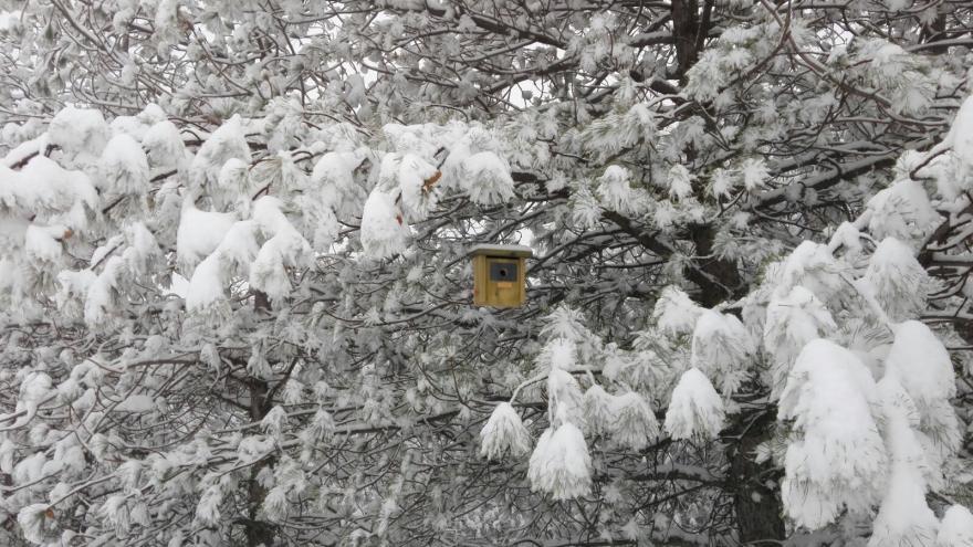 Caja nido utilizada en sanidad forestal