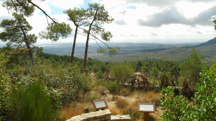 Camino en el Centro de Educación ambiental Arboreto Luis Ceballos