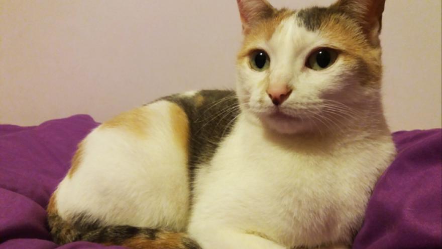 Imagen de un gato con ojos verdes