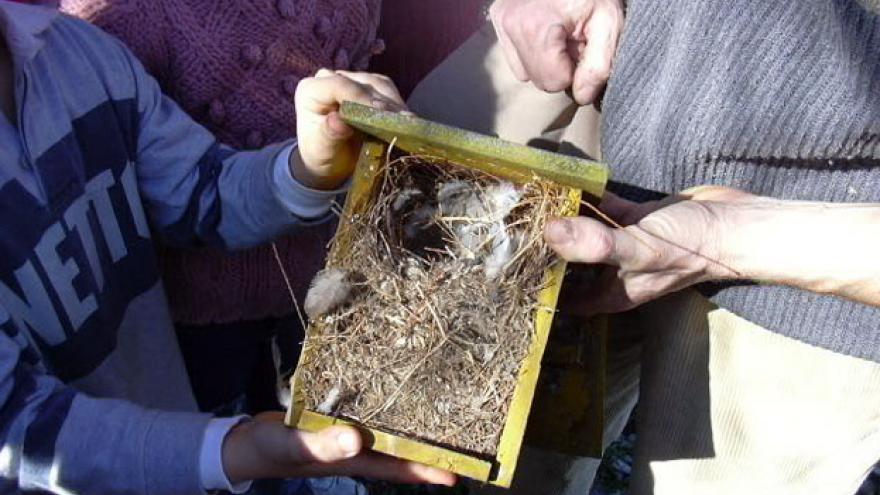 Taller de cajas nido en el Centro de educación ambiental Caserío de Henares