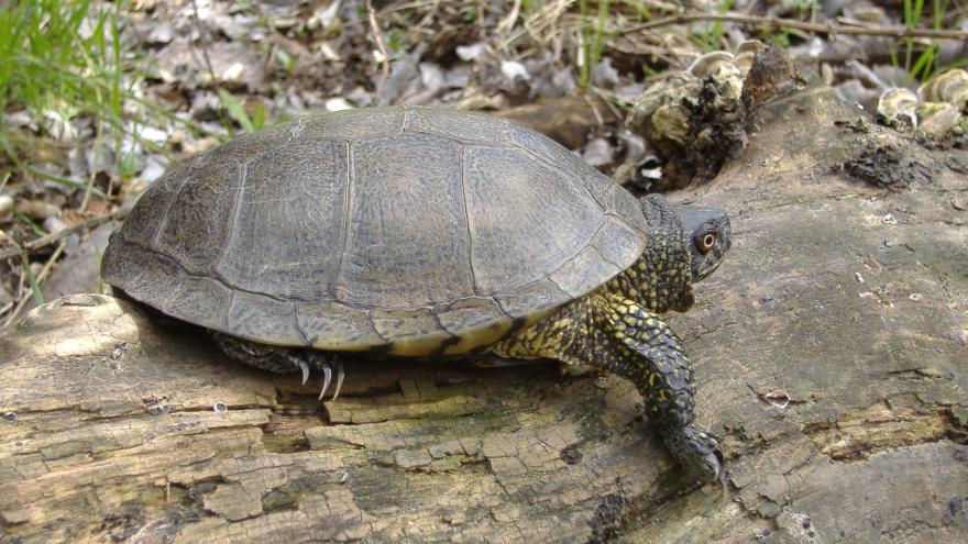 Fauna_Galapago europeo