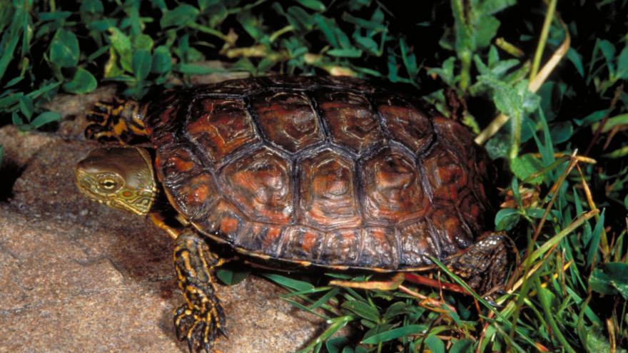 Fauna_Galápago leproso