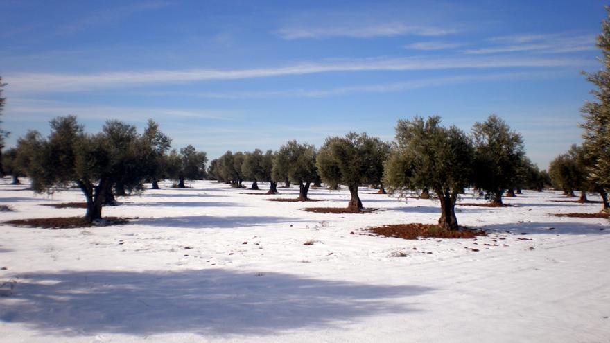 Flora_olivares nevados