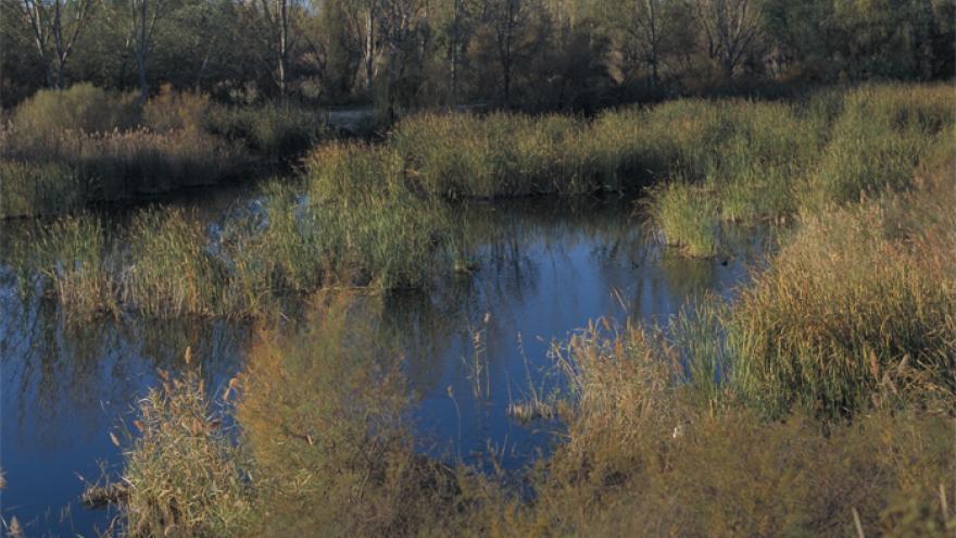 Paseo por las lagunas y la presa del río Henares