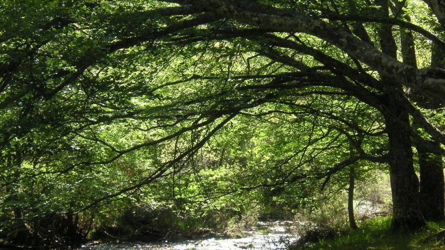 Hayedo de Montejo, itinerario guiado por el río Jarama