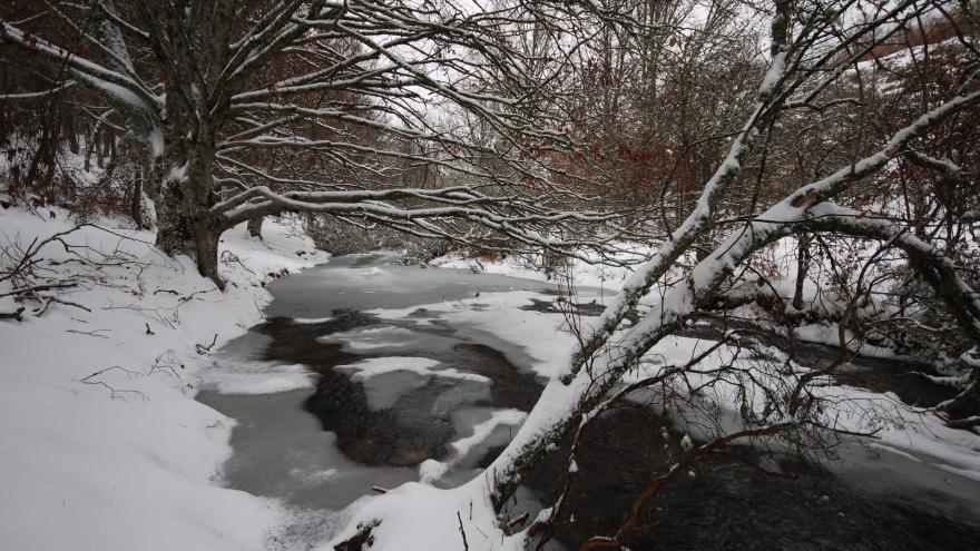 El Hayedo de Montejo en invierno