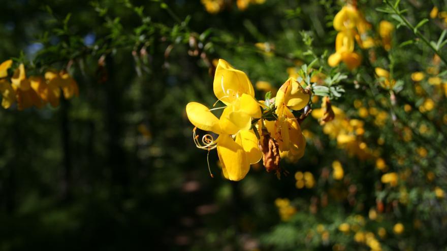 Primavera en el Hayedo de Montejo