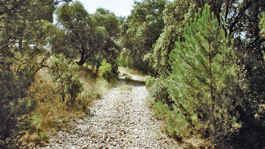 Senda circular de Navalcarnero y Río Guadarrama - R28