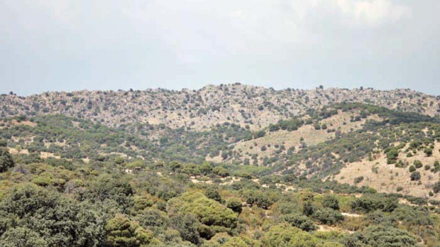 Paisaje de encinar denso con Sierra del Guadarrama al fondo