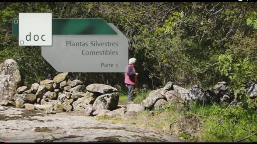 imagen para video parte1 etnobotánica