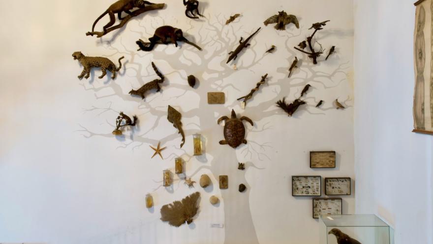 Exhibición y montaje y Gabinete de Historia Natural