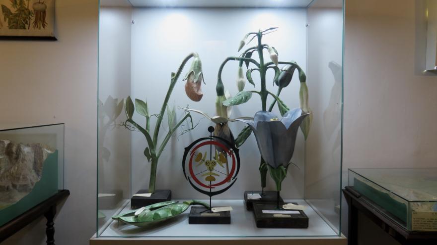 Imagen de exhibición y montaje del Gabinete de Hstoria natural