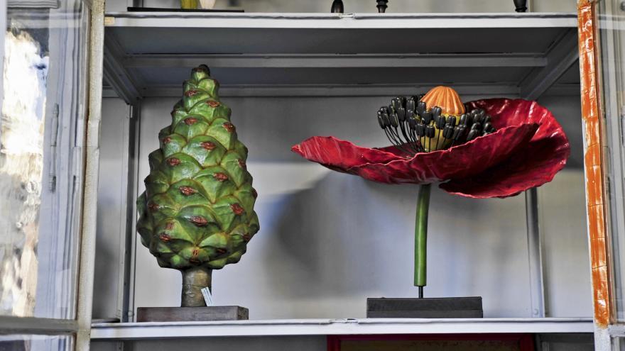 Gabinete de Historia Natural primera sala, detalle modelos pedagógicos dentro de un armario
