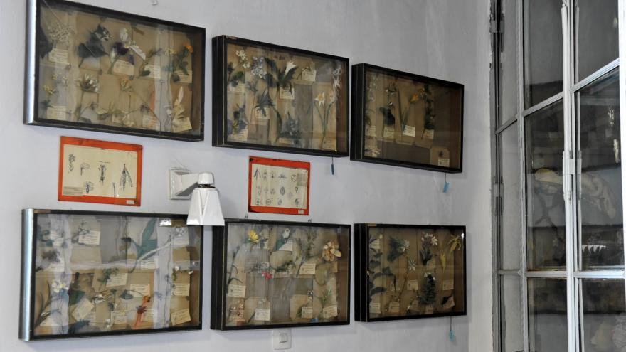 Gabinete de Historia Natural primera sala detalle modelos pedagógicos de tela