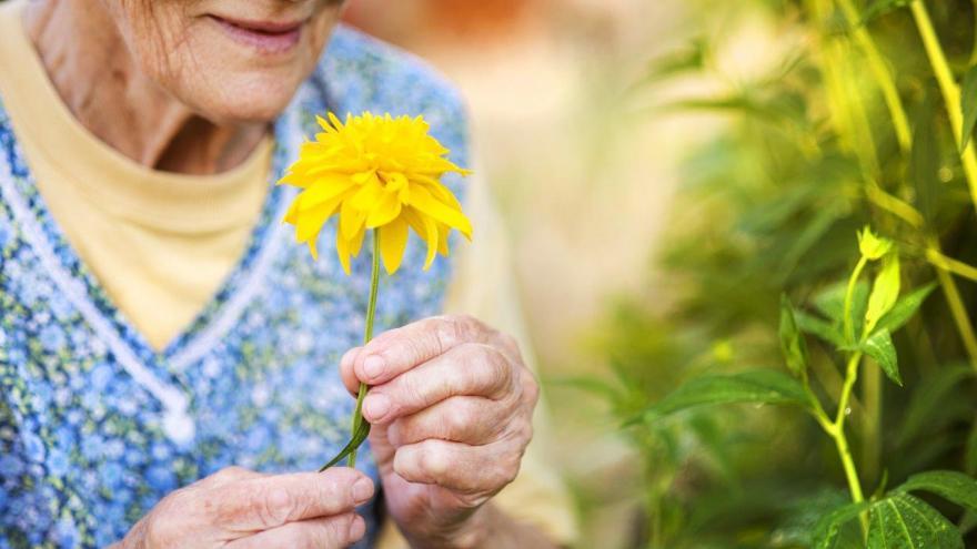 Botánica artística para el Alzheimer