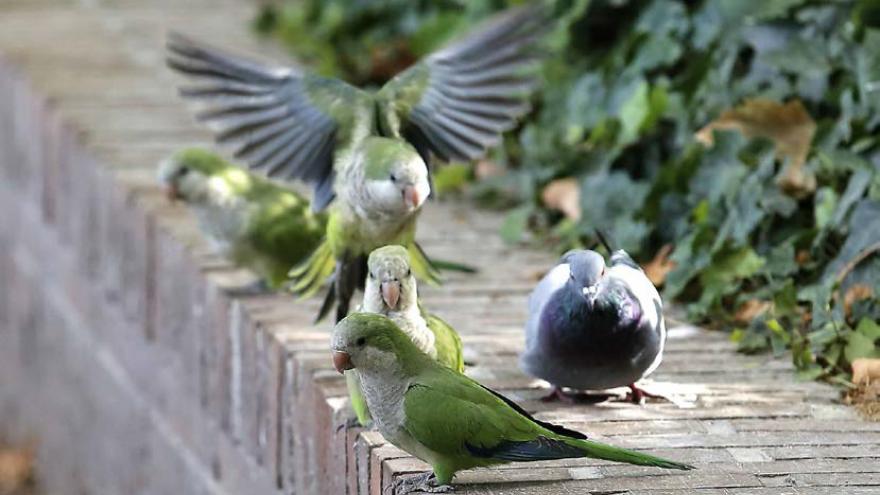 Fotografía con aves en un bordillo en la calle