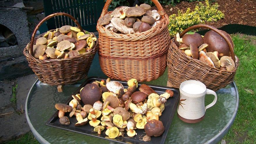 Varias cestas con setas silvestres variadas