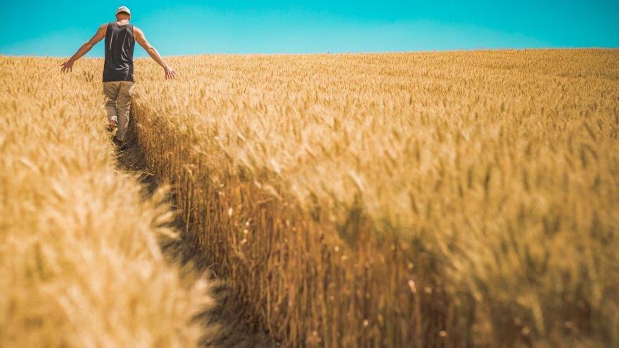 Joven en campo de cereales