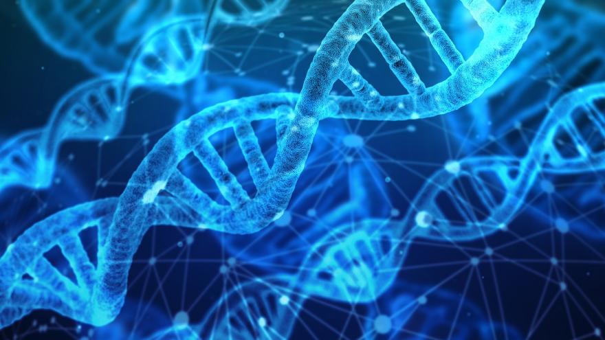 Cadena del ADN en un ser humano