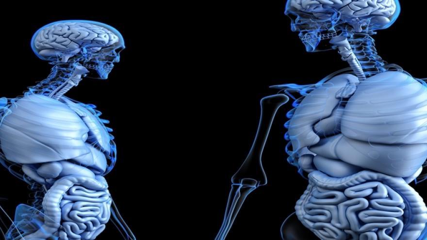 esqueletos con órganos internos