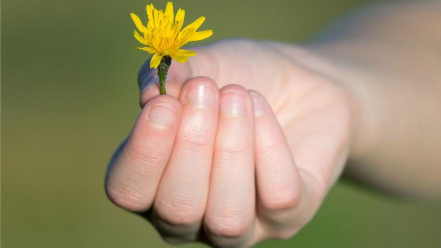 Una mano ofrece una pequeña flor amarilla